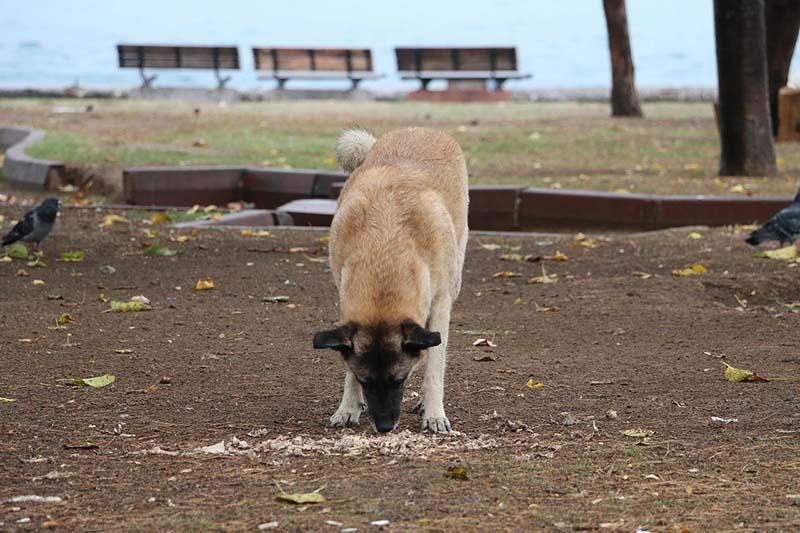 zwerfhonden in griekenland worden gevoerd door vrijwilligers