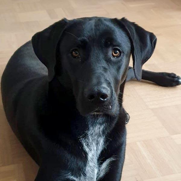 Een geweldige XXL mand voor Griekse zwerfhond Demi