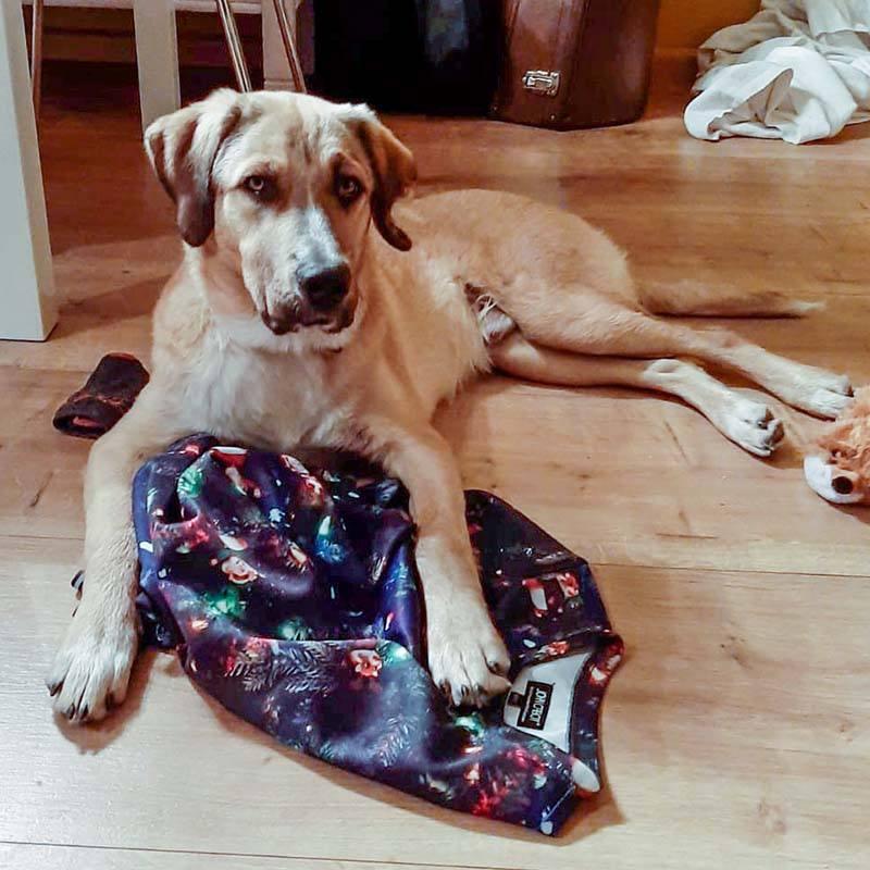 Straat en shelter zijn niks voor Flip, hij is een echte familiehond