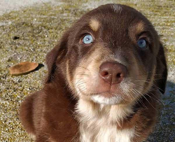Zwerfpup Aragon heeft blauwe ogen - hij zoekt een baasje!