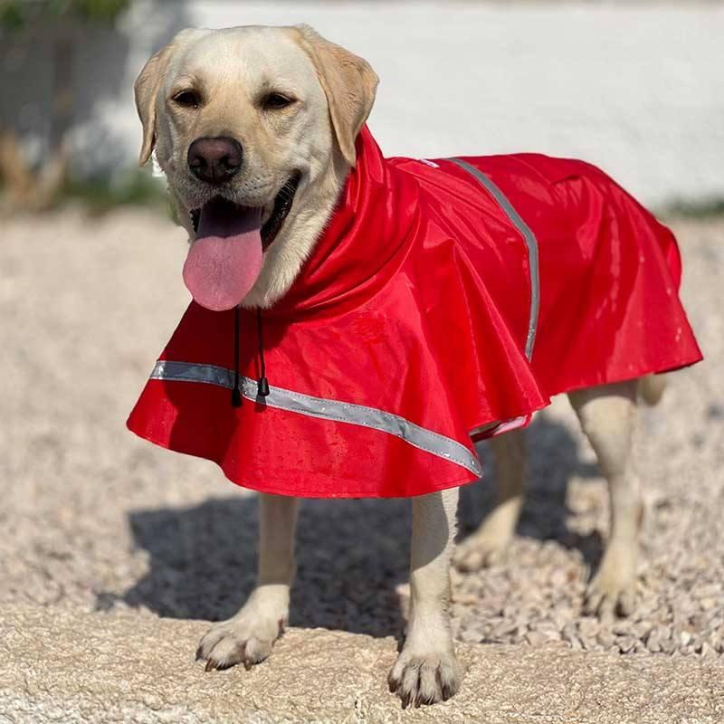 Labrador Brunno staat in de kou! Deze Griekse hond zoekt een nieuw baasje