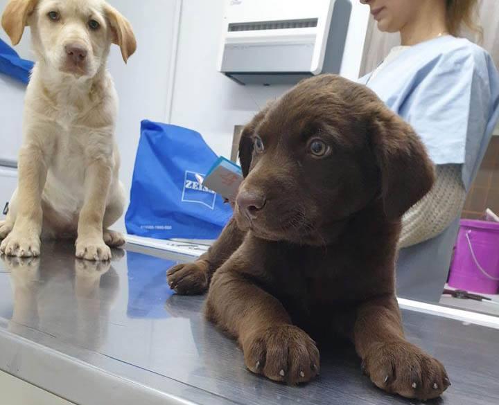 Labradormix Olle zoekt een baas! Aopteer deze Griekse pup