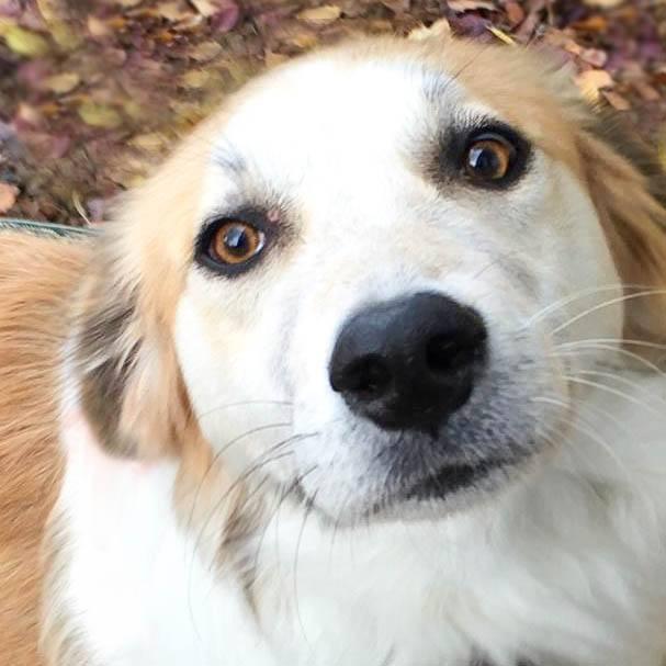 Griekse hond Otis vindt liefde bij een Nederlands gezin