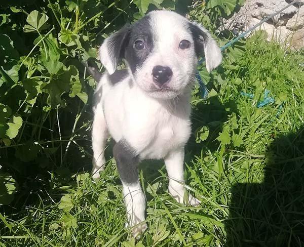 Deze buitenlandse pup was bijna geëuthanaseerd, maar verdient een mooi leven! Adopteer jij Spot?