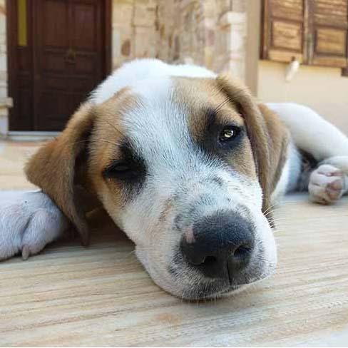 Griekse hond Frits: in het echt onweerstaanbaar!