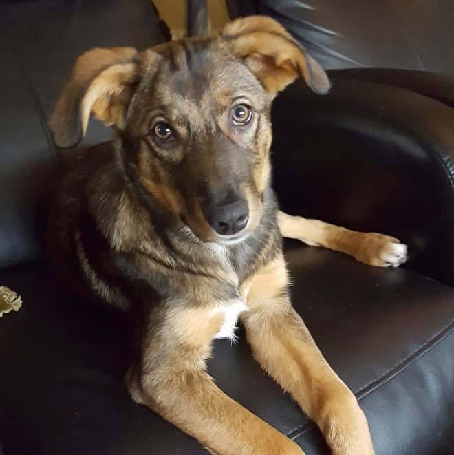 Chloe is een Griekse hond die geadopteerd is in Nederland