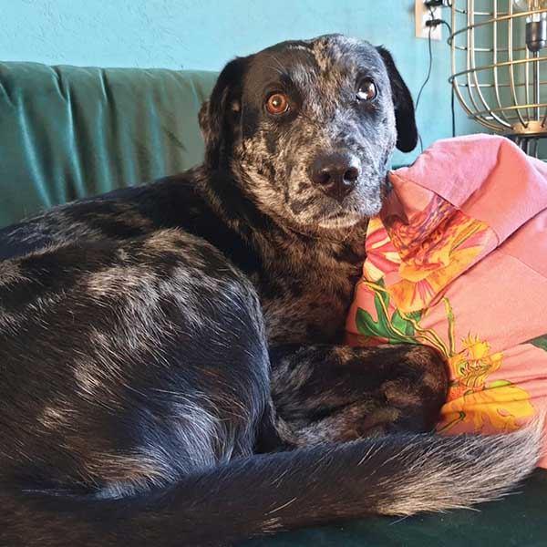 Unieke Griekse hond Willem wordt beloond voor het wachten