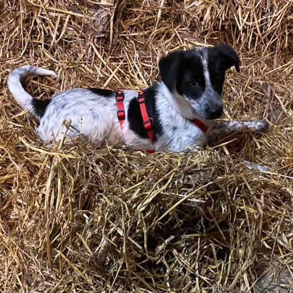griekse pup Lana rolt tevreden in het Nederlandse stro