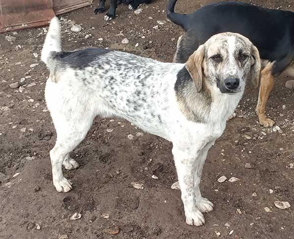 Mooie Griekse hond Adam was achetrgelaten in een greppel
