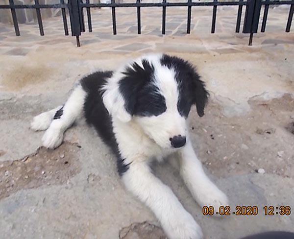 Leuke Griekse pup Meagan speelt graag_ze zoekt een baasje