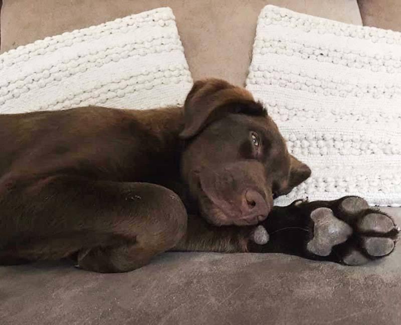 Milo: van pup op een Griekse legerbasis naar gelukkige huishond