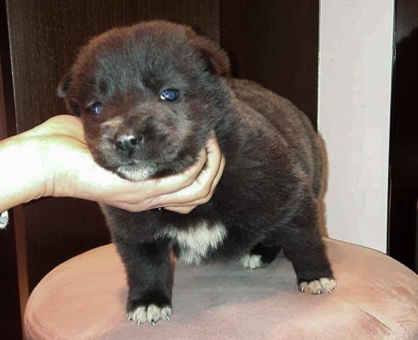 Pup Peri is met drie weken oud gedumpt _ geef haar een thuis!
