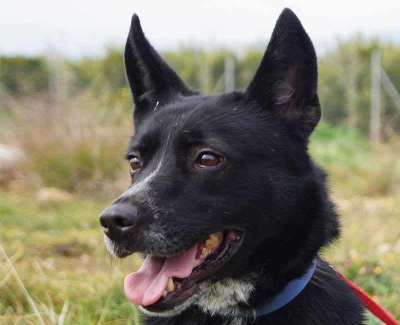 Adopteer een Griekse hond, zoals Thea