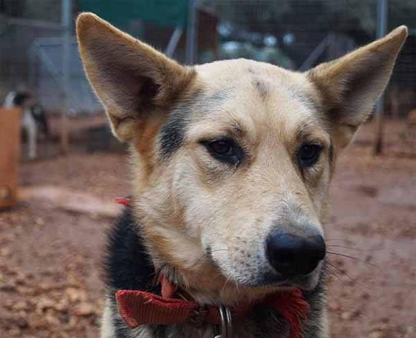 Adopteer jij een buitenlandse hond, zoals Valentina?