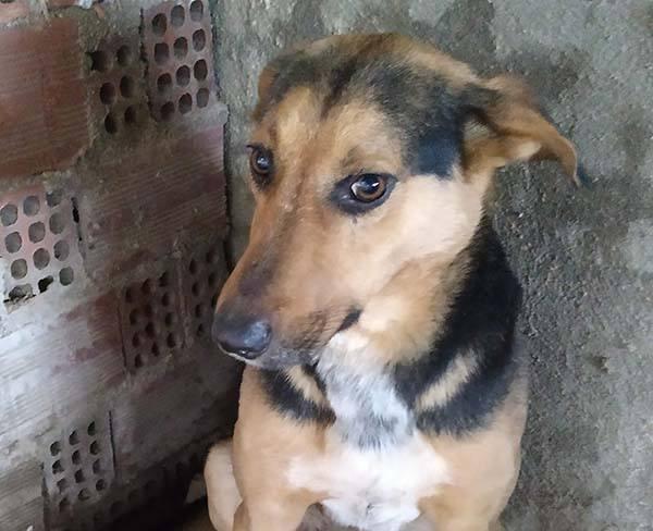 Lieve hond Zack verblijft in een riekse shelter _ hij zoekt een gouden mandje