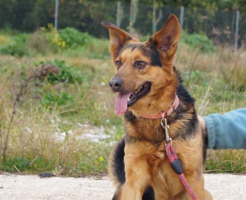 Adopteer Zack, een Griekse hond