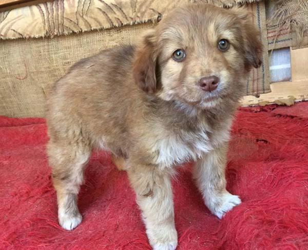 Pup Coco was gevonden in een doos - adopteer deze mooie pup