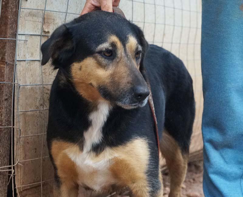 Griekse hond Eiro zit al lang in de shelter, ze wil graag geadopteerd worden
