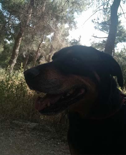 Geef Lord Fabio een thuis en adopteer deze Griekse hond