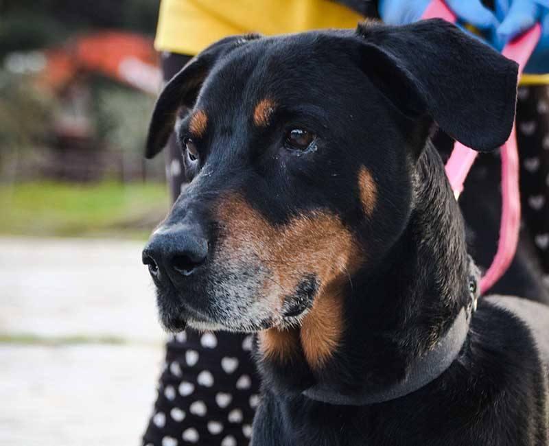 Fabio is een buitenlandse hond op zoek naar een baasje. Adopteer jij hem?