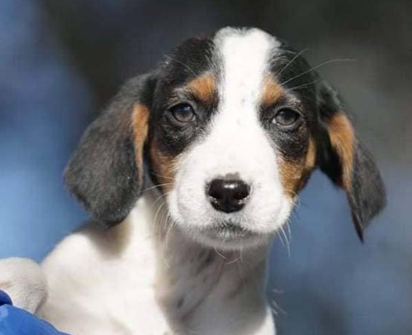 Lieve pup Lilie zoket har gouden mandje _ adopteer deze Griekse zwerfpup