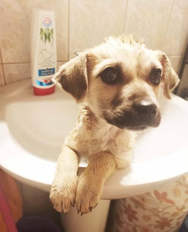 Deze schattige Griekse hond wil graag geadopteerd worden