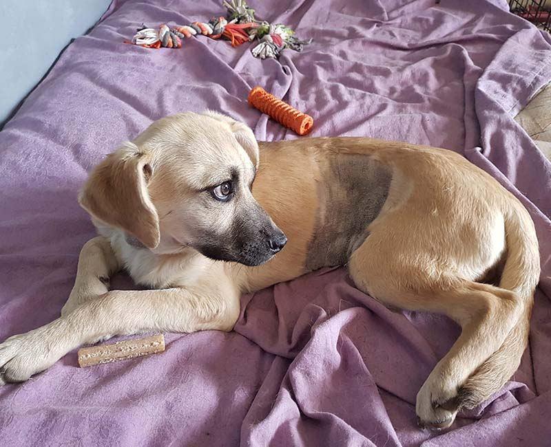Pup Quinoa heeft een leverprobleem _ help deze buitenlandse pup met adoptie