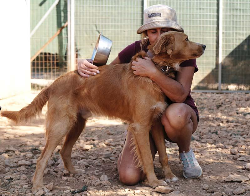 Voertekort in Griekse shelters! Doneer en geef de honden te eten