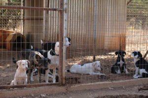 Voertekort in Griekse shelters! Doneer!