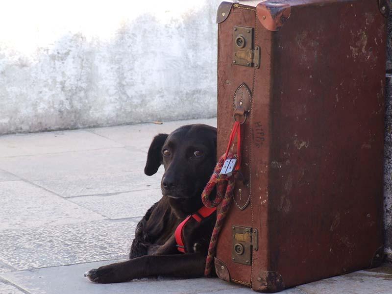 Corona en hond adopteren buitenland