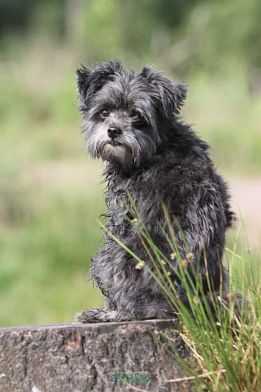 Boek een fotoshoot bij indigodog en steun Griekse zwerfhonden!