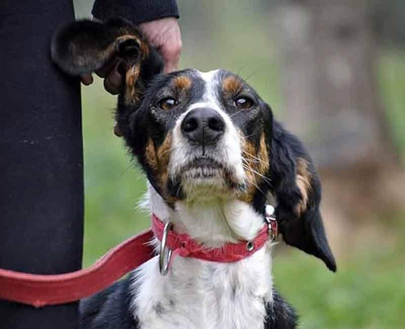Jenny is een buitenlandse hond, ze wil graag geadopteerd worden!