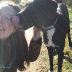 Red een buitenlandse hond door adoptie