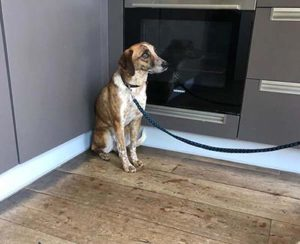Ervaringen met adoptie buitenlandse hond