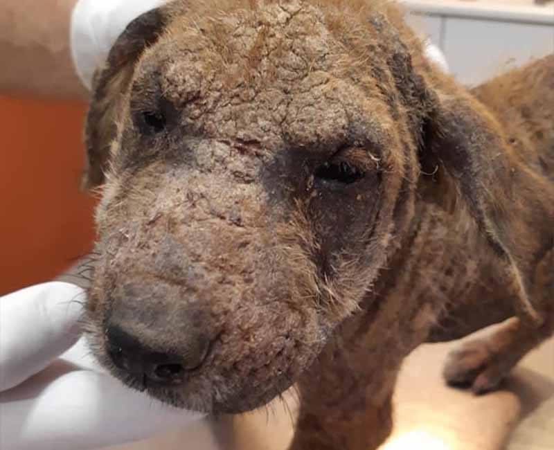 Doneer aan ons dierenartspotje en help honden als Lilla!