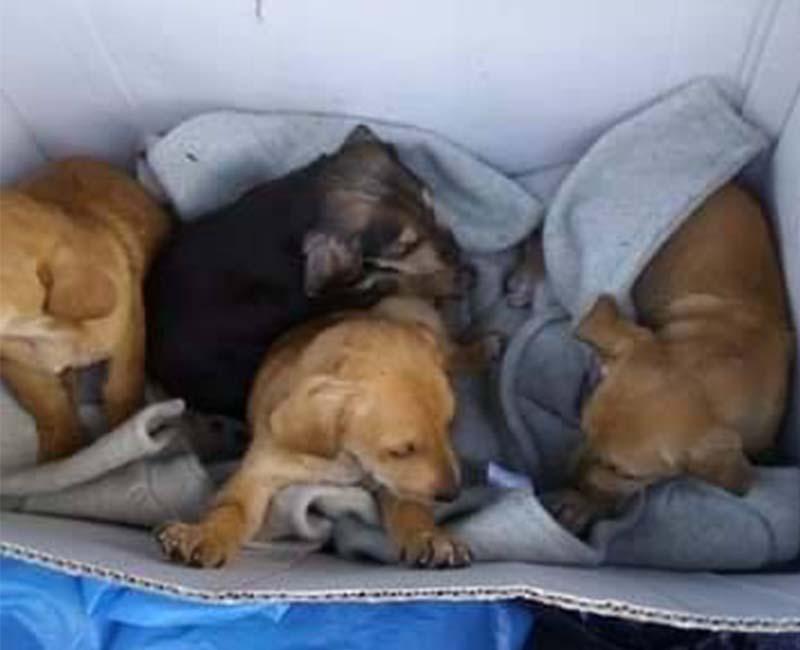Griekse pups die gevonden worden in een doos _ gedumpte zwerfhondjes zoeken een baasje