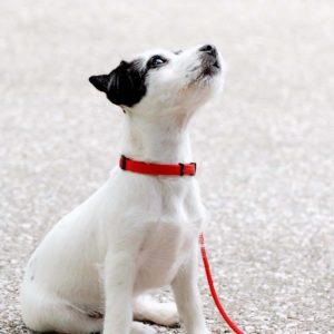 Wandelen met een pup