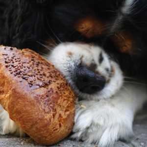 Een pup opvoeden