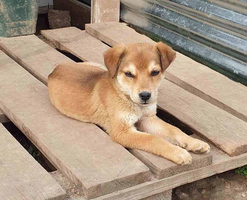 Kleine puppy Bread zoekt nog een thuis! Adopteer een Griekse hond.