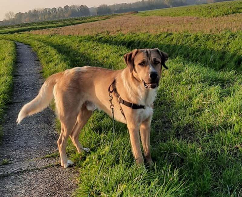 Stoere hond Flip zoekt een nieuw huisje!