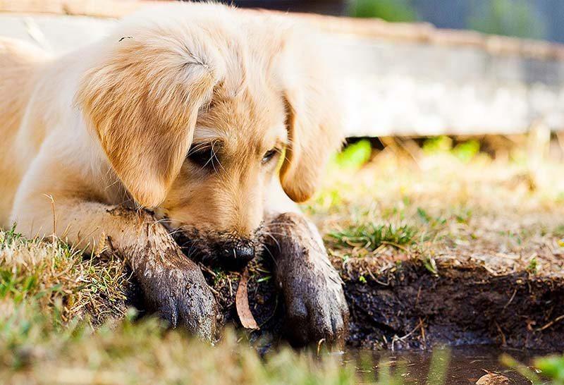 Een pup in huis _ het verschil tussen een pup uit het buitenland en Nederland