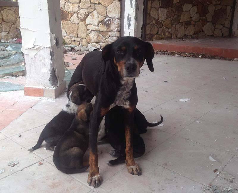 zwerfhond met pups in Griekenland