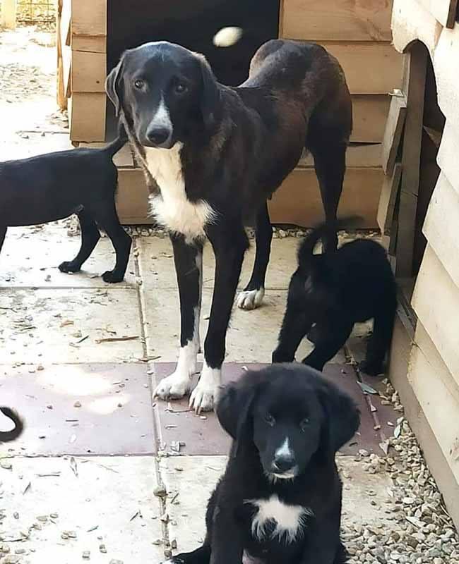 Buitenlandse teef met pups in een Griekse shelter